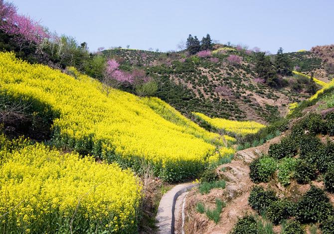 10 bellissimi campi di fiori da vedere una volta nella for Fiori acquatici
