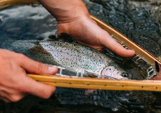 pesca alla mosca trentino