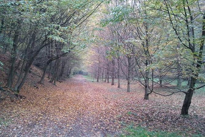 Correre nei boschi: il Parco della Brughiera Briantea
