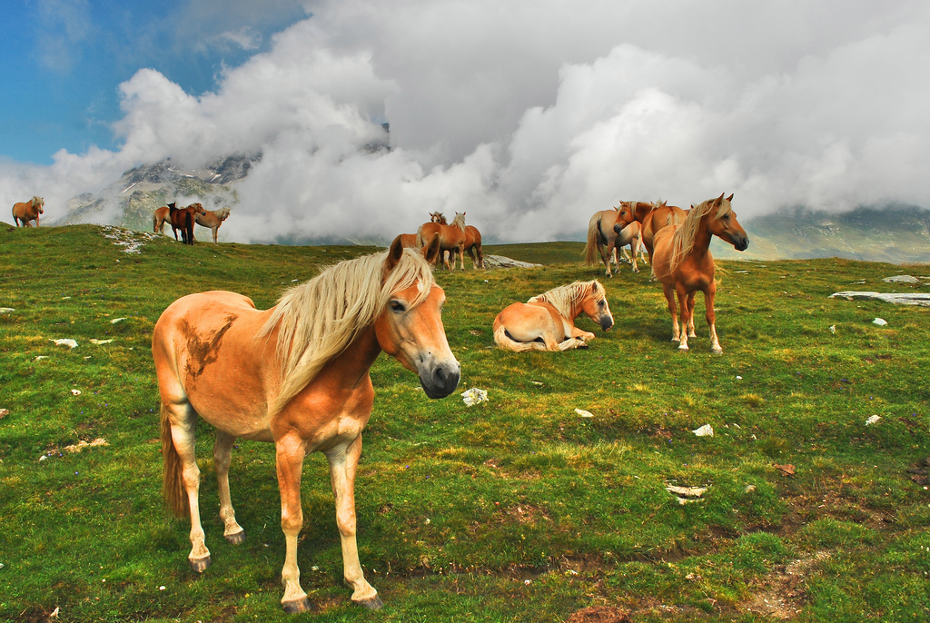 Trekking al Pian dei Cavalli, fra stelle alpine e cavalli liberi