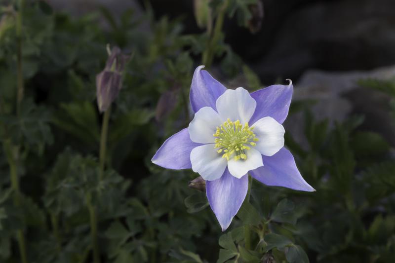 Molto 15 fiori di montagna spettacolari – SportOutdoor24 GC83