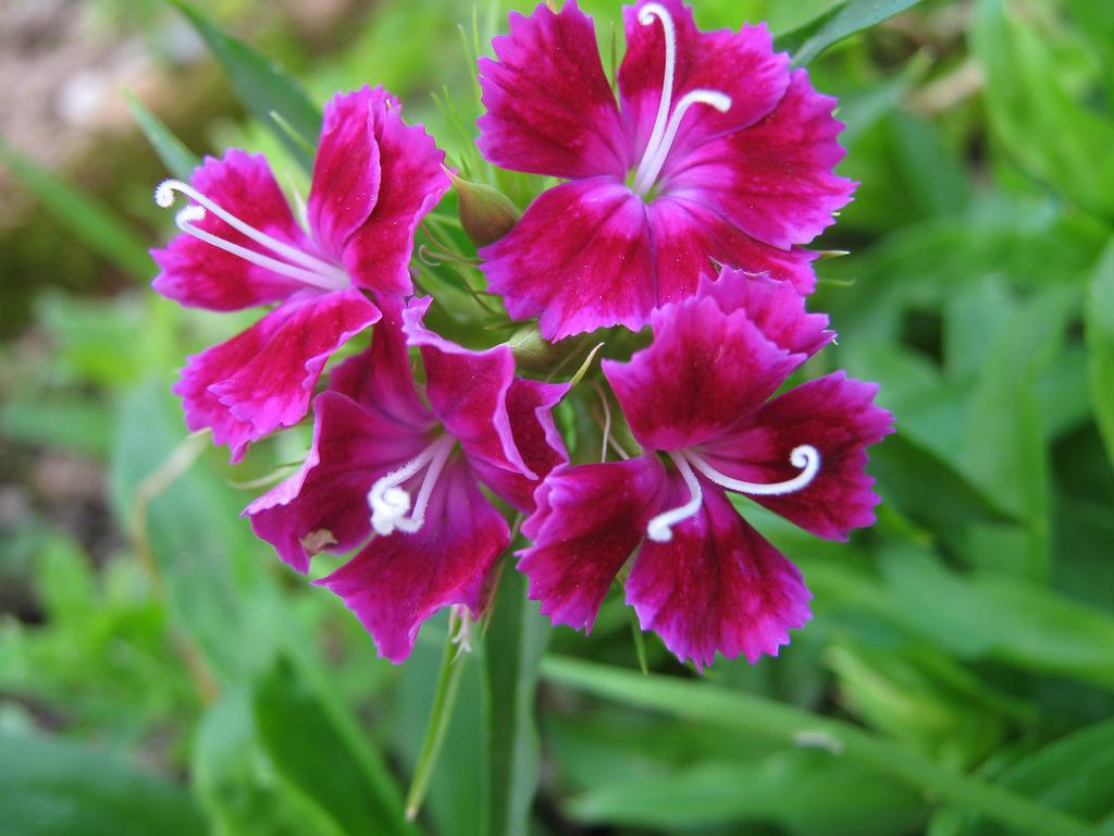 15 fiori di montagna spettacolari sportoutdoor24 for Fiori acquatici