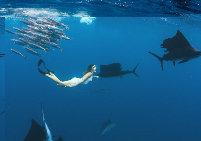 Il video di Roberta Mancino tra i pesci vela