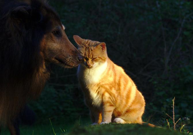adottare un animale da compagnia
