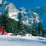 Trentino Sleddog