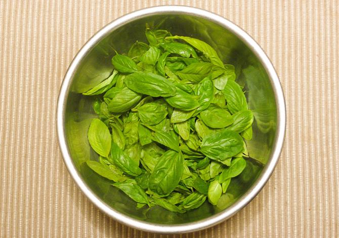 basilico piante aromatiche