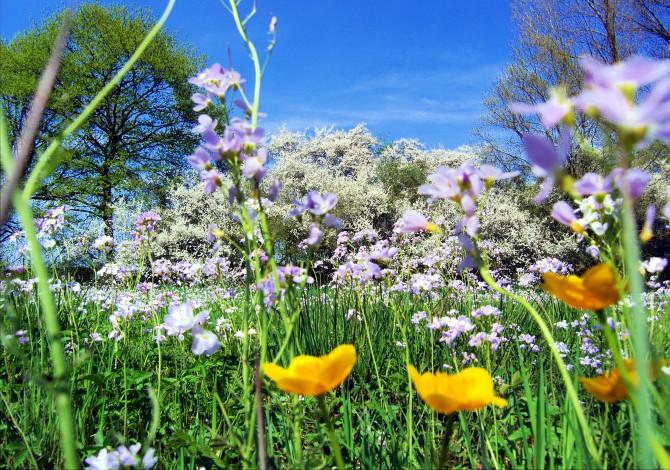 Allergie Primavera Rimedi