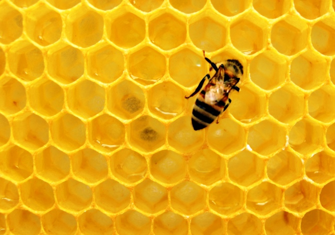 Come mettere un alveare in casa anche in citt for Immagini api per bambini