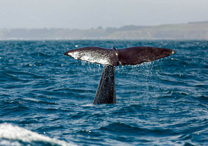 Whale Watching, dove andare a vedere le balene in Italia