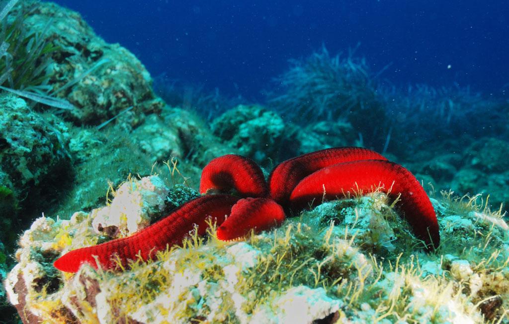 I 10 migliori spot dove fare snorkeling in Italia