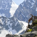 Sentiero dei Passi Alpini
