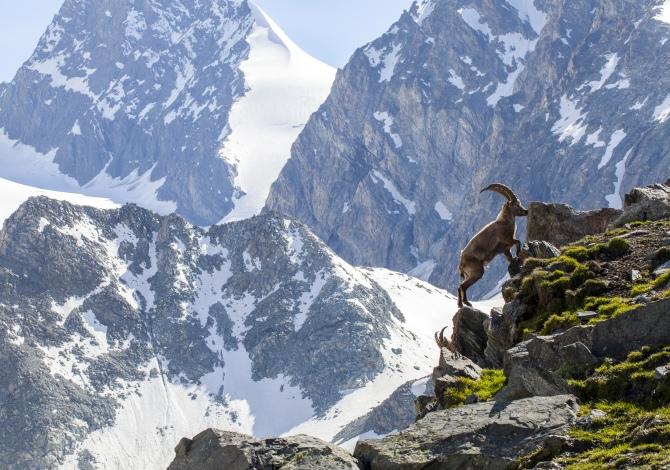Il Sentiero svizzero dei Passi Alpini: febbre a 4000