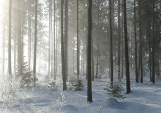 Neve Felicità