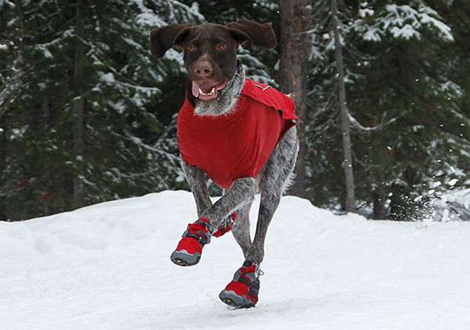 5 prodotti per portare il tuo cane sulla neve