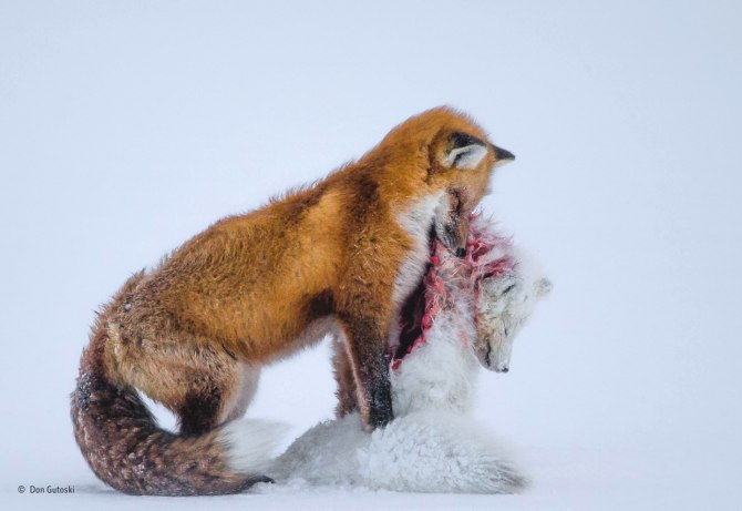 Le più belle foto del Wildlife Photographer of the Year in mostra al Forte di Bard