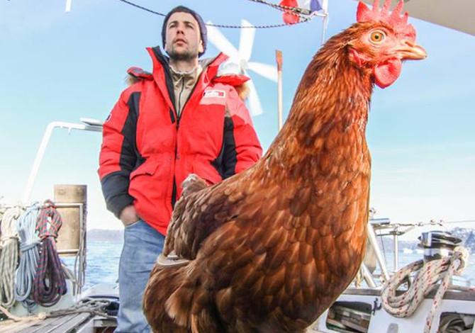 Guirec Sodée e il giro del mondo in barca a vela con una gallina