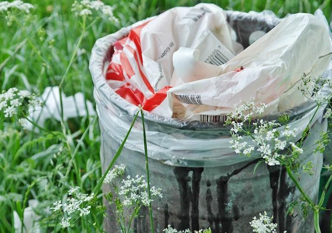 Il bruco che digerisce la plastica ci salverà dall'inquinamento?