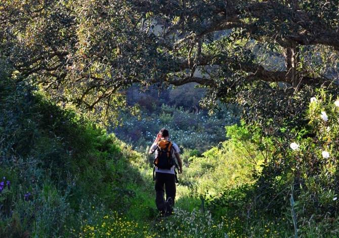 Rota Vicentina, i boschi della tappa 10. Foto Rota Vicentina