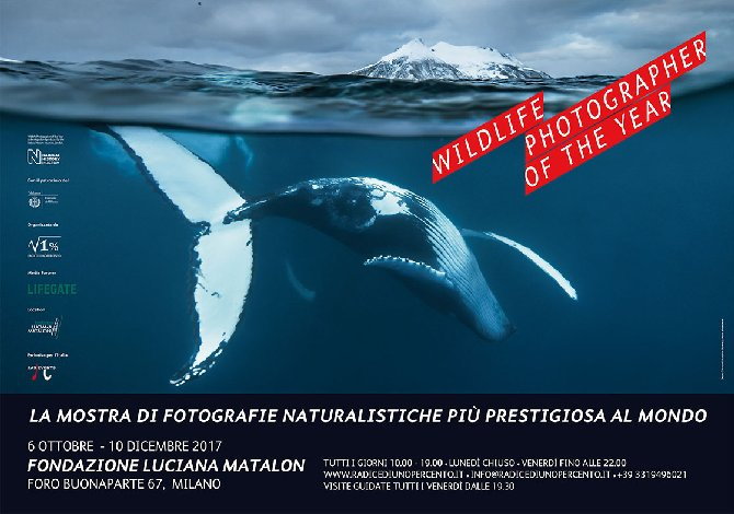 Locandina Wildlife Photographer of the Year 2016 Milano