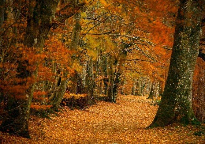 lady-marys-walk_visitscotland