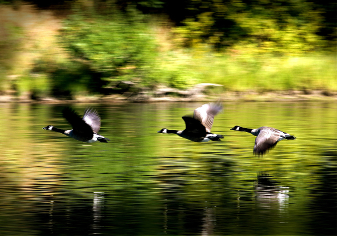birdwatching_1