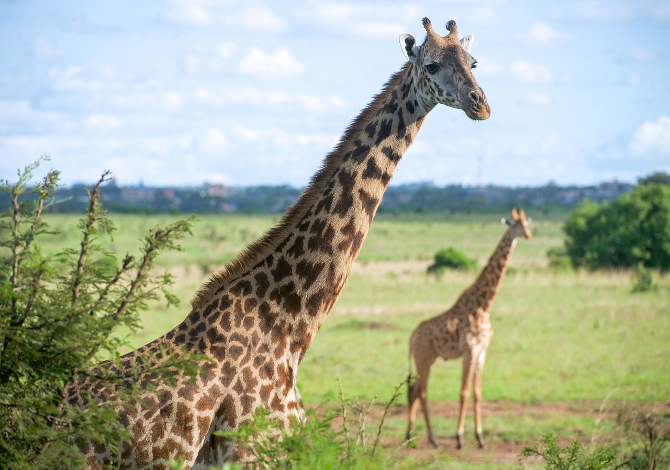 TRIP_Nairobi