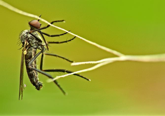 Perché le zanzare pungono alcune persone (e altre no)