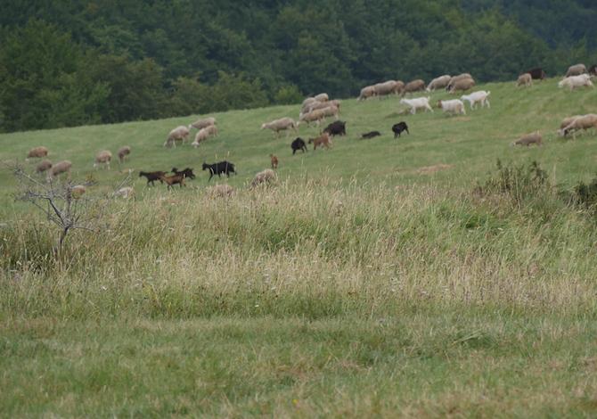 majella-con-bambini-bosco-lama-bianca-pecore-foto-de-mori