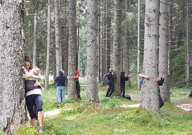 abbraccio-alberi-stelvio-trento