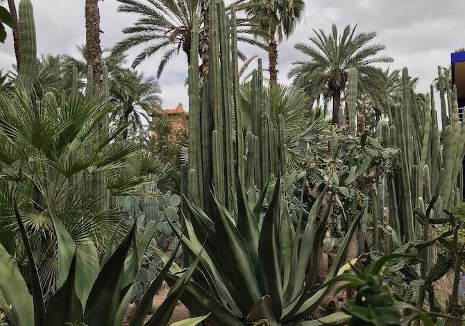 marrakech-con-i-bambini-weekend-majorelle