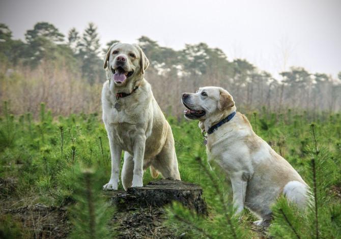 Le migliori razze di cani per correre