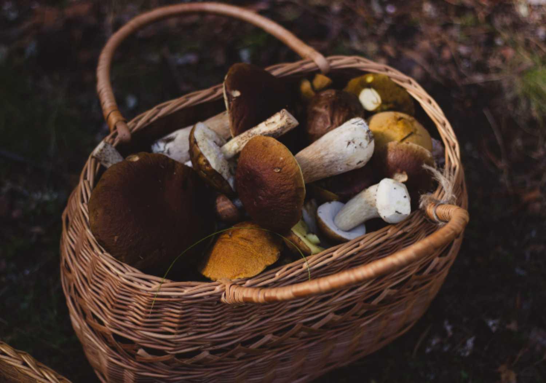 Raccolta funghi: tutte le regole da conoscere