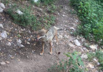 parco-abruzzo-lupo-martino-de-mori