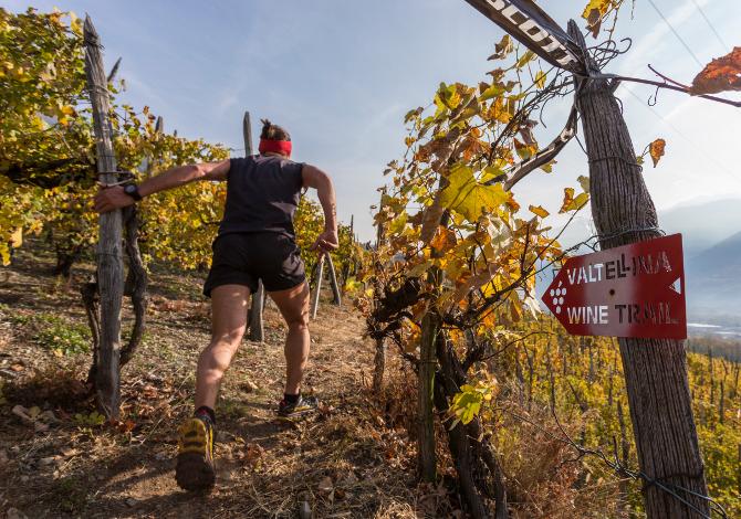 Valtellina Wine Trail 2019: programma, orari, percorsi