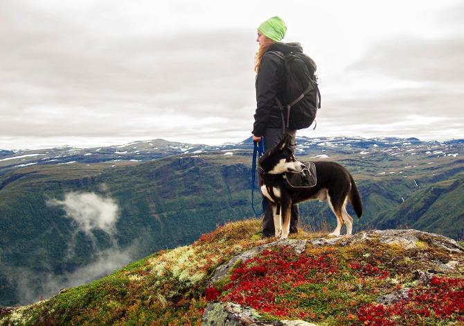 Cane in montagna regole divieti comportamenti