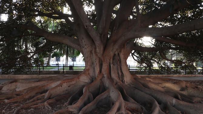 panasonic-lumix-gx9-prova-albero