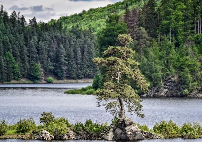 albero-dellanno-sta-in-repubblica-ceca-e-ha-350-anni