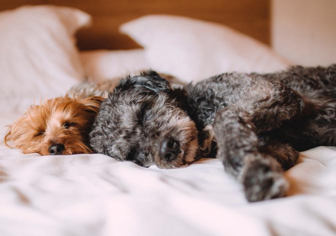 Coronavirus: l'uomo lo trasmette a cani e gatti (non il contrario)
