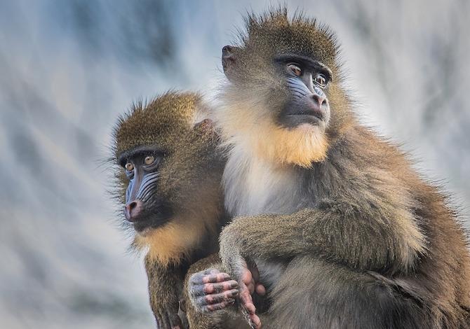 distanza-sociale-cosa-possiamo-imparare-dagli-animali