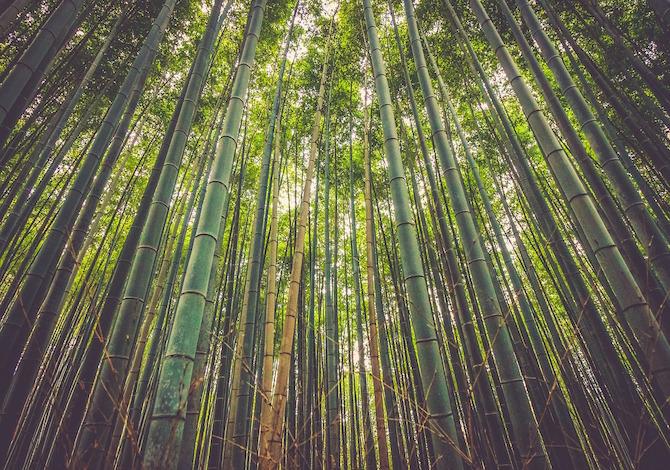 i-prossimi-grattacieli-saranno-fatti-di-bambu-rinforzato-a-microonde