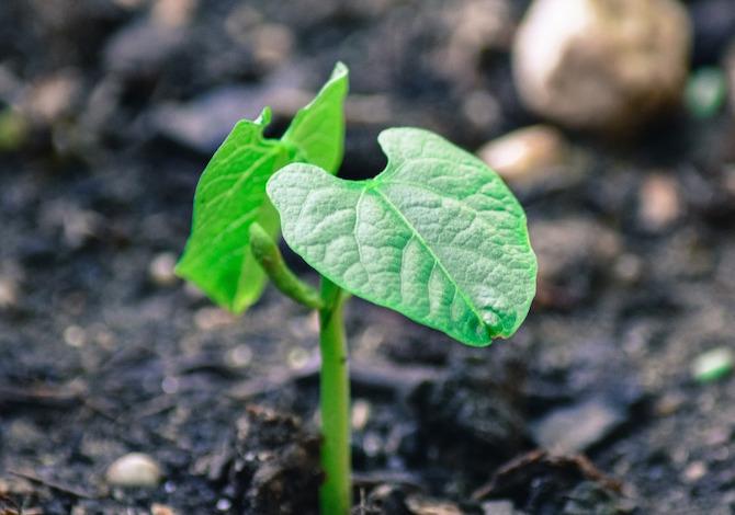 piante-comunicazione-chat-segnali-elettrici-sottoterra