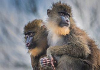 scomparso il 70% di animali selvatici