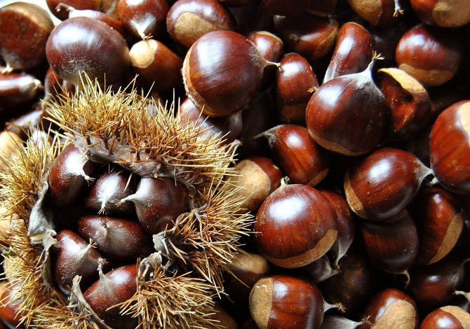 castagne in toscana