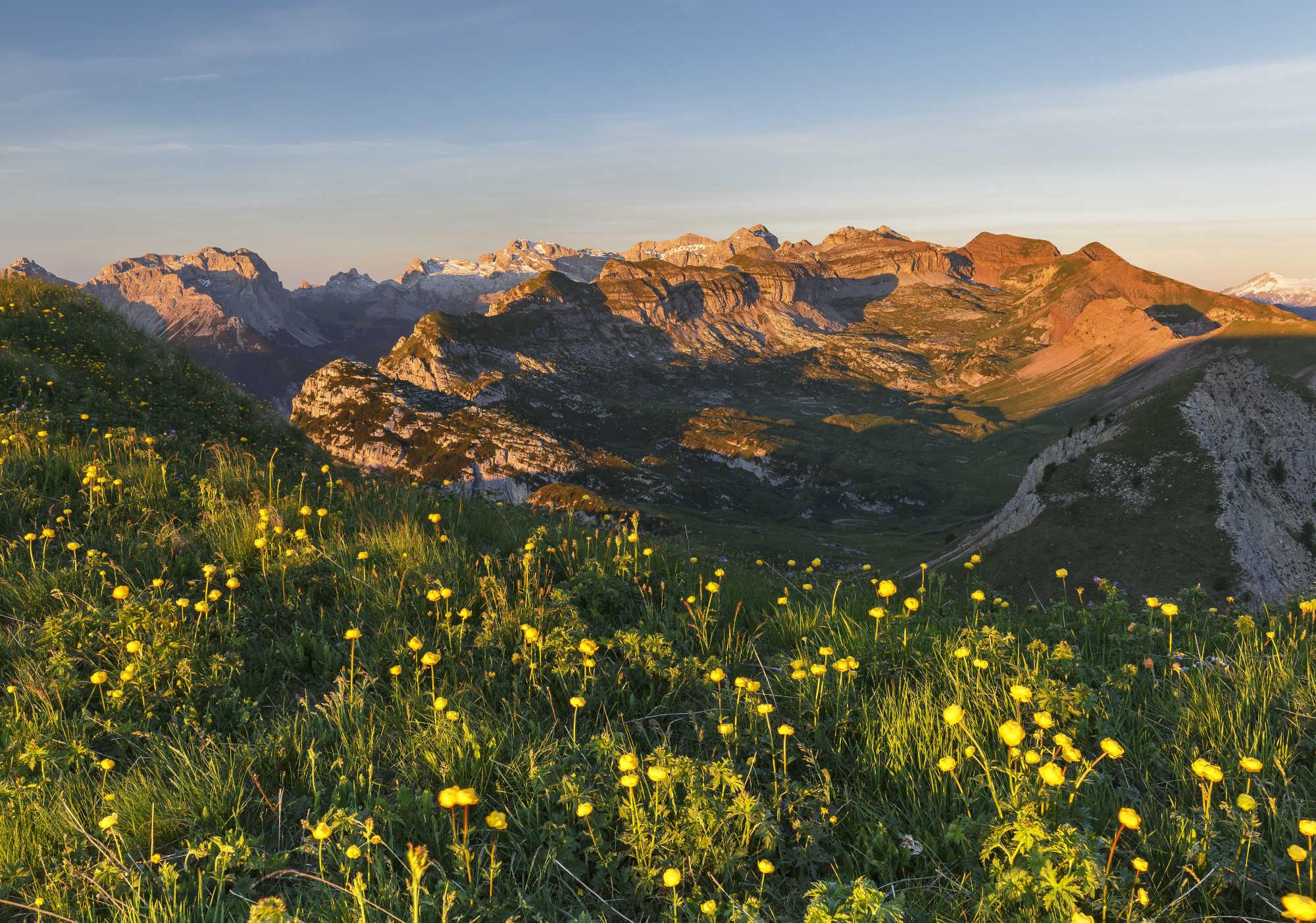 Passeggiate in Trentino ad ammirare la fioritura di primavera- val-di-non-monte-peller-botton-d-oro-foto-alessandro-gruzza