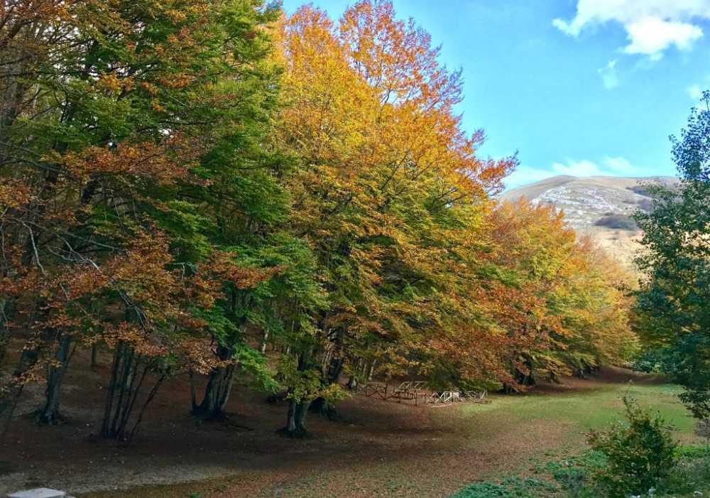 Escursione nel Parco Regionale del Monte Cucco Boschi
