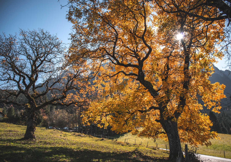 6 weekend a vedere il foliage d'autunno nel suo splendore