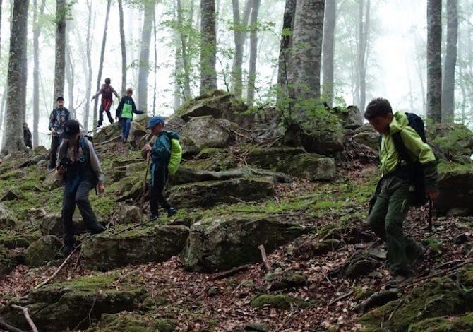 cammino-di-san-francesco-caracciolo-le-nuove-tappe-bosco