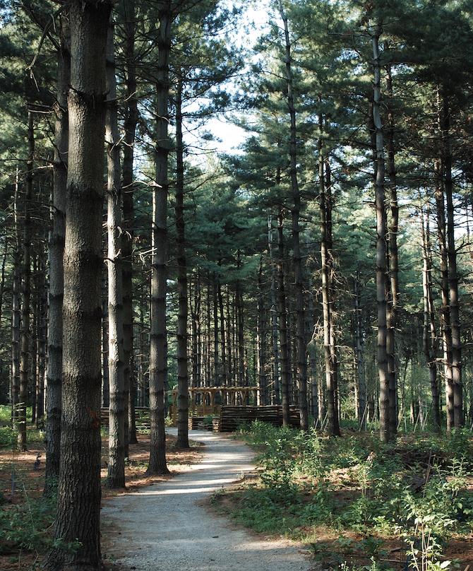 escursioni-in-brianza-bosco-chignolo